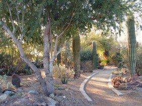 Native plant and hardscape yard