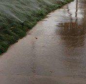 Irrigation System Watering Sidewalk