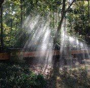 Sunlight shining through the trees exposing high irrigation pressure