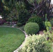 Planting area between turf and sidewalk.